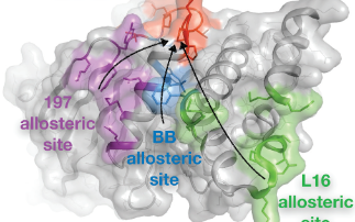 Toward remote control of an 'undruggable' dynamic enzyme with structurebased fragment screening