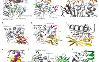 Engineering antibodies to treat cystic fibrosis