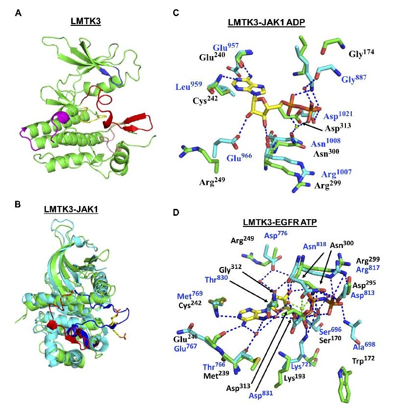 Crystal structure of LMTK3. <br/>Image: University of Sussex