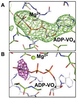 Figure 2: Electron density maps. (A) Clear |Fo|-|Fc| electron density map (green mesh