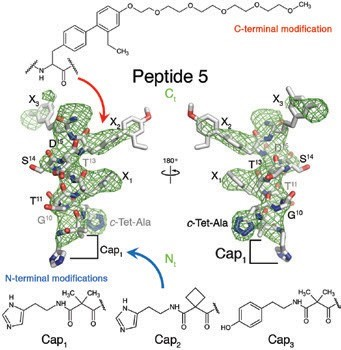 Figure 3: Details of Peptide 5 and its modifications. Peptide 5 is shown in stick representation